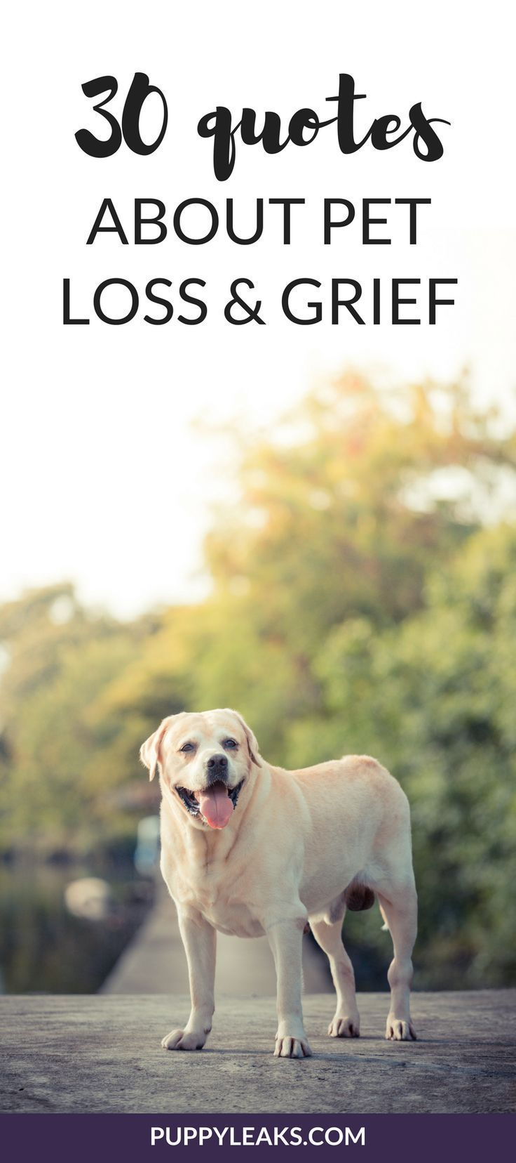 30 Quotes About Losing a Dog & Dealing With Grief | Dog ...