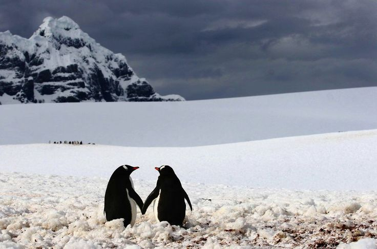 Love is in the Air and All Around, and These Animal Couples are Deeply Lost in it - Viralomia