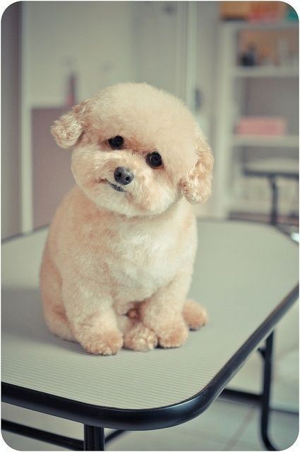 Teddy bear cut!