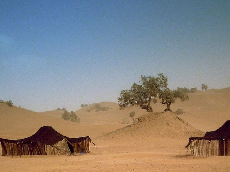 Tentes traditionnelles dans le désert du Sahara Marocain. Traditionnal tents in the Marocan Sahara desert.