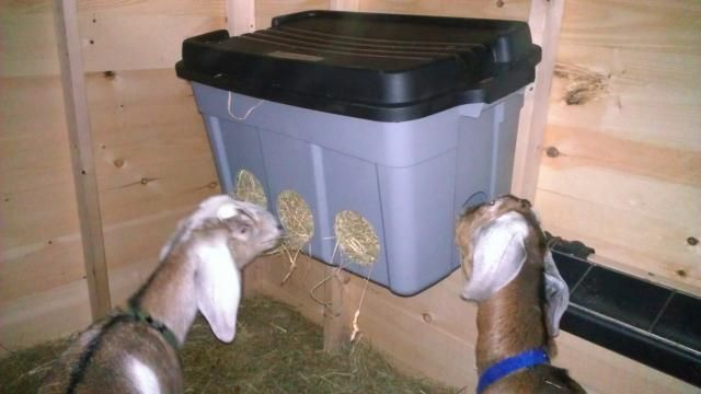 "Love this idea.  My two Oberhaslis waste a ton of hay with their current feeder.  6/20/13:  Finally got it done.  Now to see how well it does. 7/8/2013: Seems to be working well.  There is still a bit of waste, after all they are goats, but no where near the amount I had before. 9/1/2013 - Need to make the holes smaller.  The goats figured out they could put their entire head in and began pulling out tons of .hay.  We took it down until they are older and now use a 1.5"" Nibble Net."