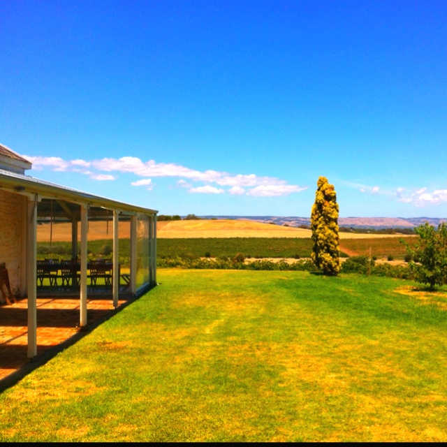 Lunch yesterday at Coriole Winery in the Maclaren Vale, SA. Magnificent!