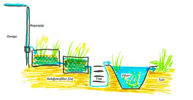 Natuurlijke kleine vijver maken met helofytenfilters en zonder pomp | Iris Garden Ecology