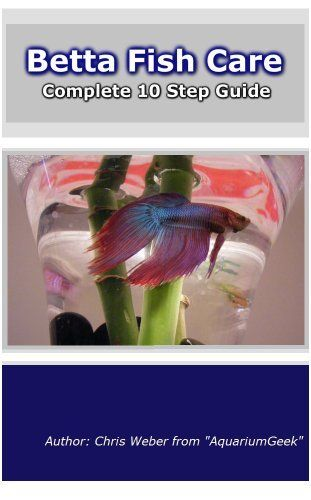 1000 images about betta fish on pinterest for Care for betta fish