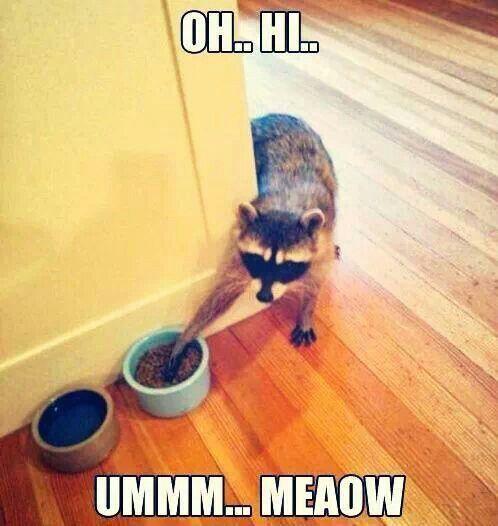 Um...that's not a cat...