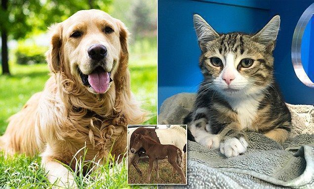 Rspca Australia Slashes Adoption Costs To Just 29 Adoptioncosts Adoption Costs Cats And Kittens Adoption