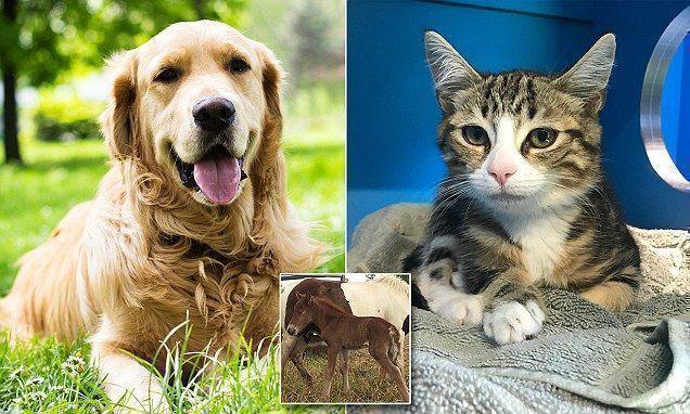 Rspca Australia Slashes Adoption Costs To Just 29 Adoptioncosts Adoption Costs Cats And Kittens Adoption