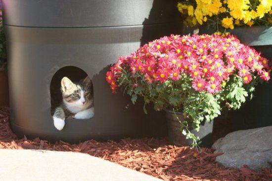 Gatito Tube gato de la casa al aire libre completamente aislado