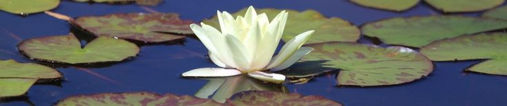 Blog I like, yoga, nature, spirit -  http://dadirridreaming.wordpress.com/2011/09/12/shortcuts-to-inner-peace/