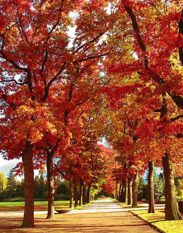 Autumn, Hilversum, Netherlands