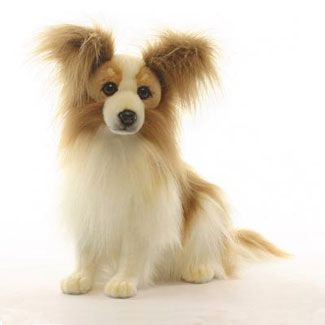 papillion dog 16h from hansa realistic plush papillion dog the coat of the dog is. Black Bedroom Furniture Sets. Home Design Ideas