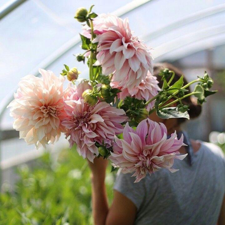 Beautiful Daliha flowers ♡