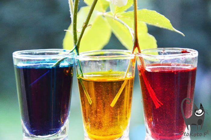 Zabawy dla dzieci - eksperyment z kolorami