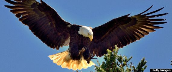 Eagle Cam Showing D.C. Bald Eagle Family Is Totally Wonderful