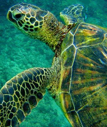 Swim with sea turtles all over the Carribean