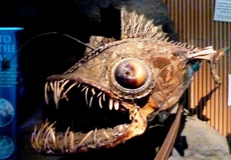 Oceanographic de Valencia. Pez abisal. Oceanographic  Valencia, Spain Abyssal fish