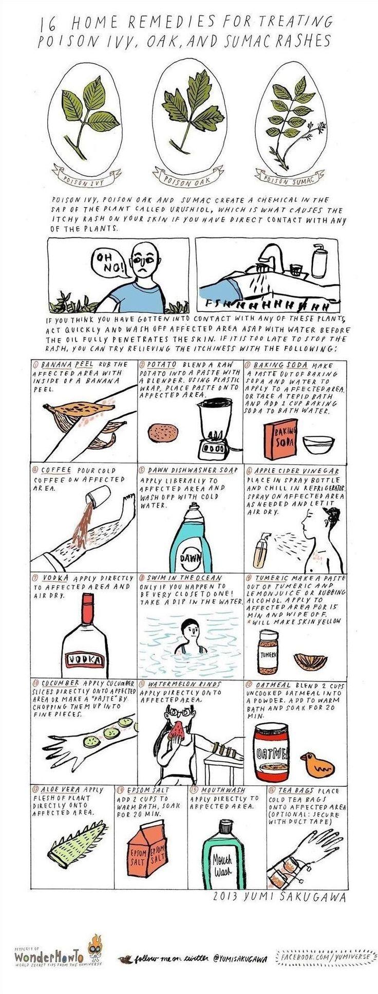 16 Home Remedies for Treating Poison Ivy, Oak & Sumac Rashes « The Secret Yumiverse :: WonderHowTo