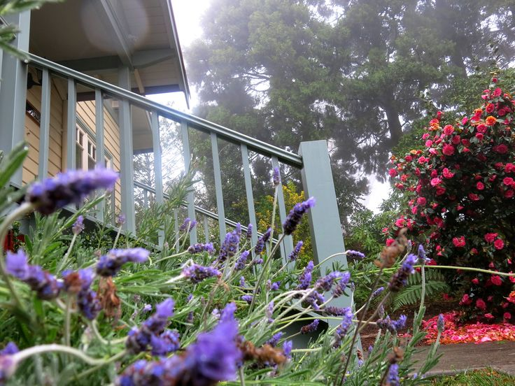 A misty spring morning in the Heath. Brantwood Cottage Blackheath NSW
