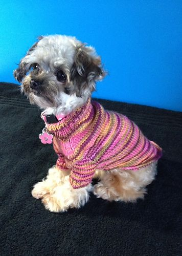This is Luci the owner of the cashmerino  doggie sweater.