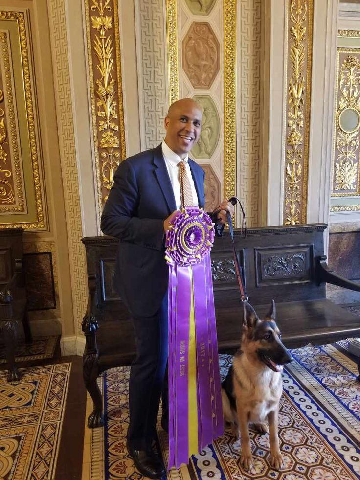 "Cory Booker with ""Rumor"" (Grand Champion Lockenhaus' Rumor Has It V Kenlyn), the German Shepherd Dog who took Best in Show honors at both the 2017 Westminster Kennel Club Dog Show and the 2015 AKC National Championship took a grand tour of the U.S. Capitol to raise awareness of purebred dogs and National Purebred Dog Day. Breeder/owner/handler Kent Boyles, his family, representatives from the AKC, and Senate Director of Door Keepers (and Labrador Retriever Breeder) Krista Beale accompanied…"