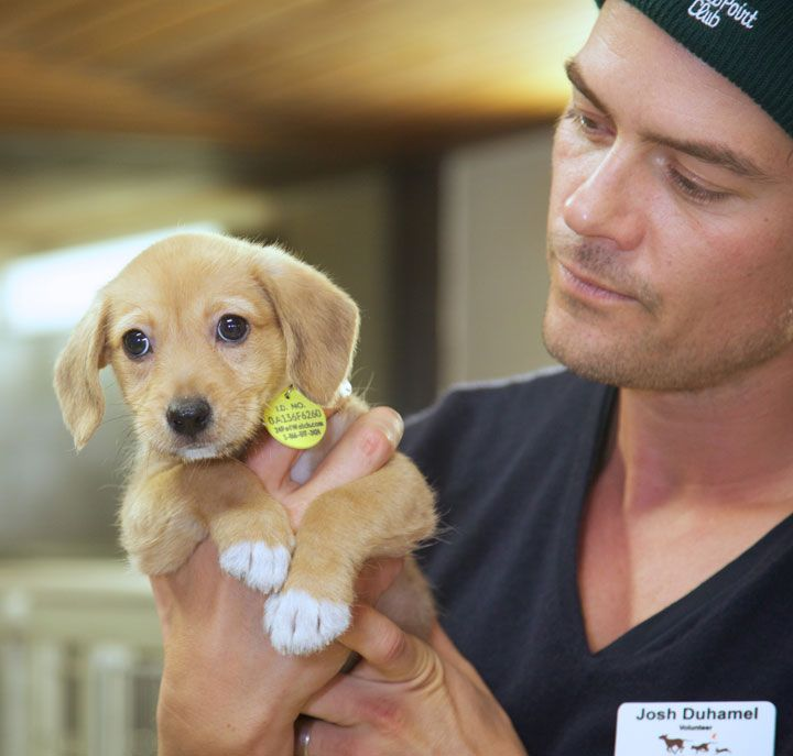 Best Celebrities With Animals Images On Pinterest A Dog - Cute portraits baby and rescue dog