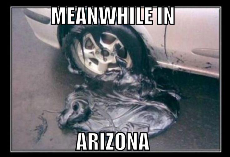 #Meanwhile in #Arizona... #hahaha