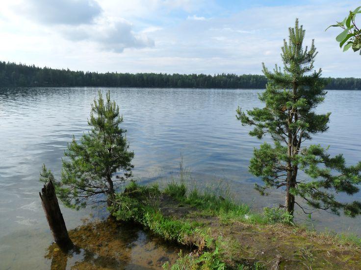 Белое озеро, Кургаловский полуостров, Ленинградская область