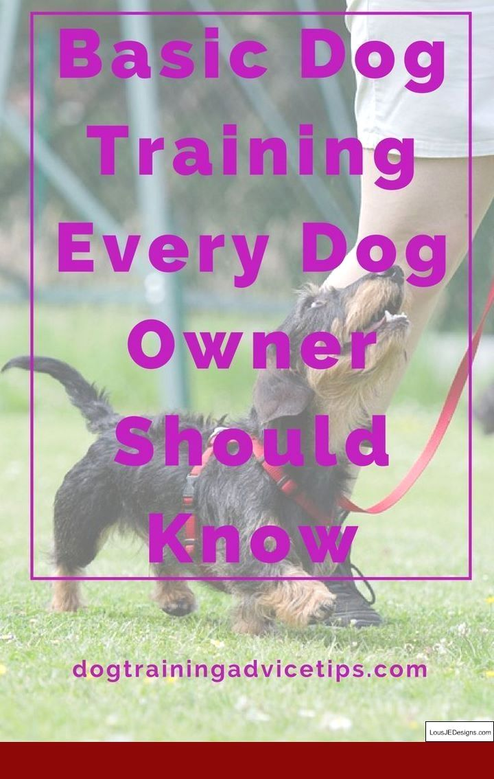 Tips On Training A Dog To Pee Outside And Pics Of Best Way To