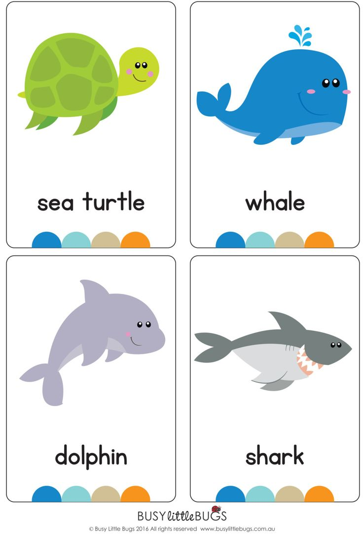 Under the Ocean Flash Cards AUTOMATIC by BusyLittleBugsShop