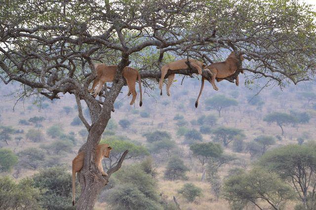 セレンゲティ国立公園にて(タンザニア)