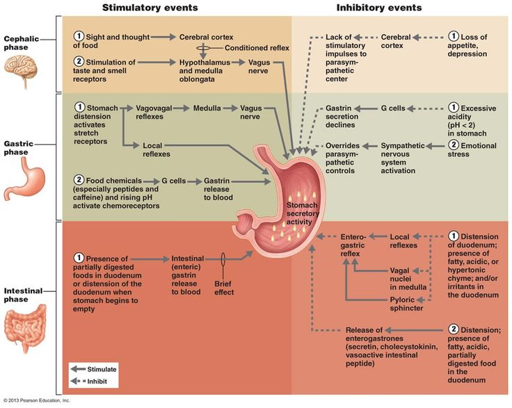 the digestive system anatomy review You need a frame enabled browser to view this site digestive system toc digestive system you need a frame enabled browser to view this site.