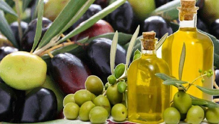 «Θεϊκό» φάρμακο οι ελιές! Δεν φαντάζεστε τα οφέλη που χαρίζουν στην υγεία μας!   DefenceNet.gr