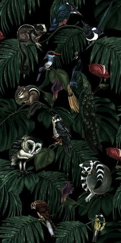 Amazonia Dark | Witch and Watchman Wallpaper