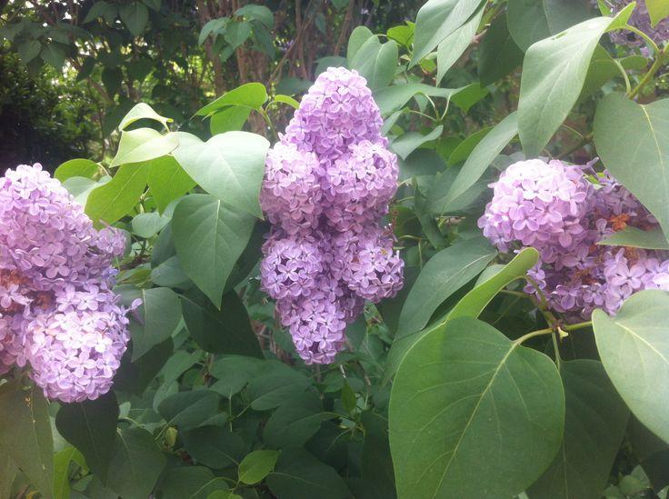 32 best flowers of south west france/fleurs du sud-ouest images on