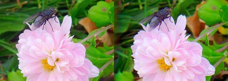 Macro attachment for the Fuji FinePix REAL 3D W1 camera.