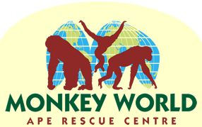 Monkey World Ape Rescue Centre Dorset UK assists gov'ts around world to stop primate smuggling from the wild. The centre has refugees of this illegal trade and those who have been abused & neglected  are rehabilitated into natural living groups