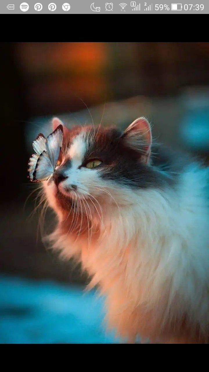 Pin By Boson De Higgs On Beasts And Kittens Cute Cat Wallpaper Cat Pics Cute Animals