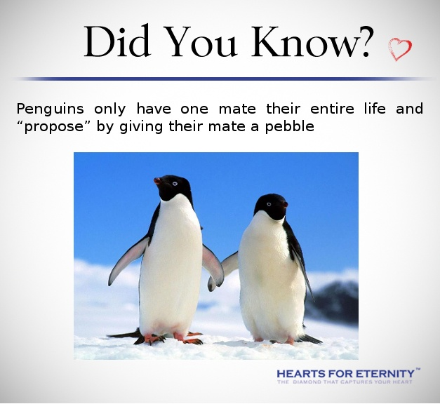 15 best images about Love facts on Pinterest | Hold hands, We and ...