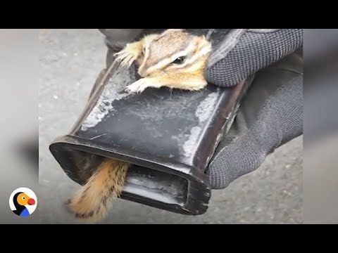 SCARED Chipmunk Stuck in Truck Hitch Rescued by Patient Guy | The Dodo - YouTube
