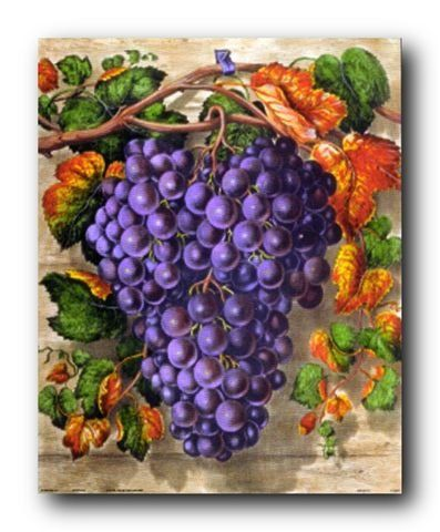 Give an affordable yet chic makeover to your home especially to your dinning or kitchen area with this beautiful black grape still life fruit kitchen art print poster. This wonderful poster depicts the image of black grapes which makes a perfect accompaniment your dining area. It would also make a fabulous gift for those who love to collect fruit pictures.