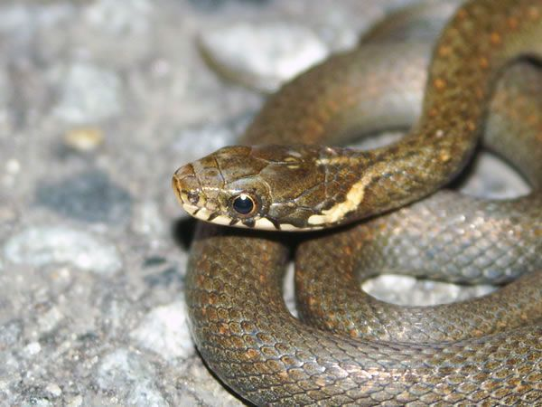 Here a long list types of small snake in the world. #small snake #typesofsmallsnake