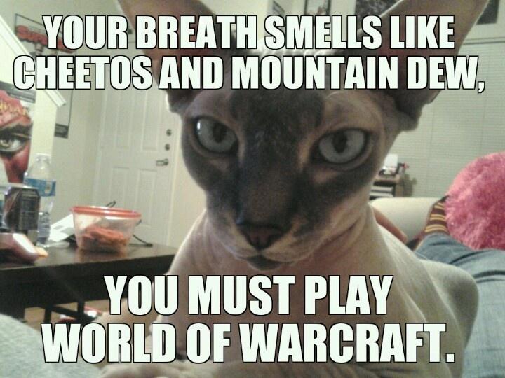 Judgmental Cat  Ugly Nails Memes  Cat MemesUgly Pussy Meme