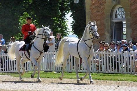 Actualité spectacle cheval & équitation : Dernières représentations pour les Jeudis du Pin au Haras du Pin
