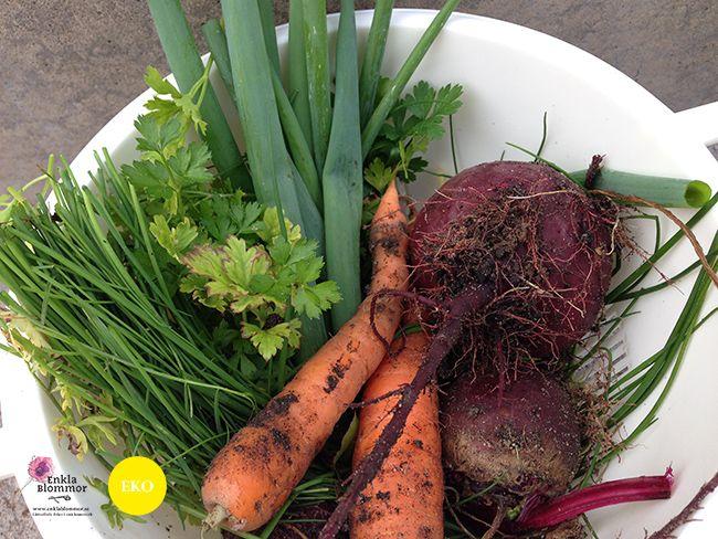 Skörden från att odla i pallkrage - allt är ekologisk, ekologiskt! http://www.enklablommor.se/blogg