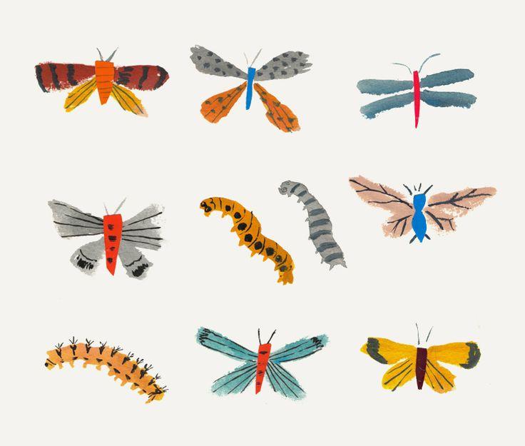 Danielle Kroll - Butterflies