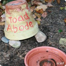 Make a Toad House - National Wildlife Federation