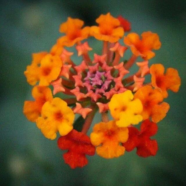 Summer colours E.M. #flower #nature #summer
