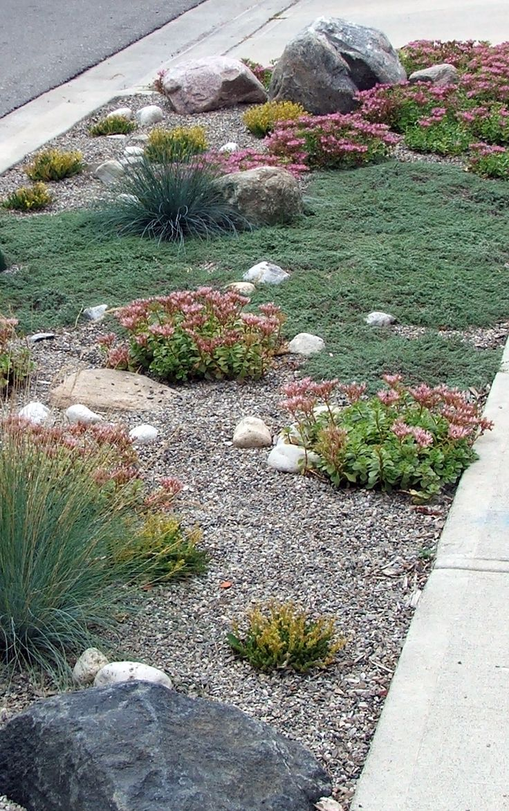 This is a less-is-more approach that I really like - with a gravel mulch you have an attractive background while the (undisturbed) plants have room to spread.  Helichotrichon, sedum, thyme, with pebbles, large and small rocks.  This is very well done.