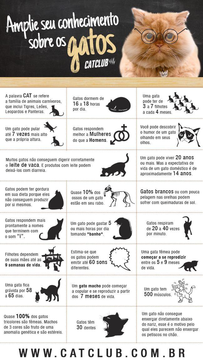 Amplie seus conhecimentos sobre os gatos                                                                                                                                                      Más