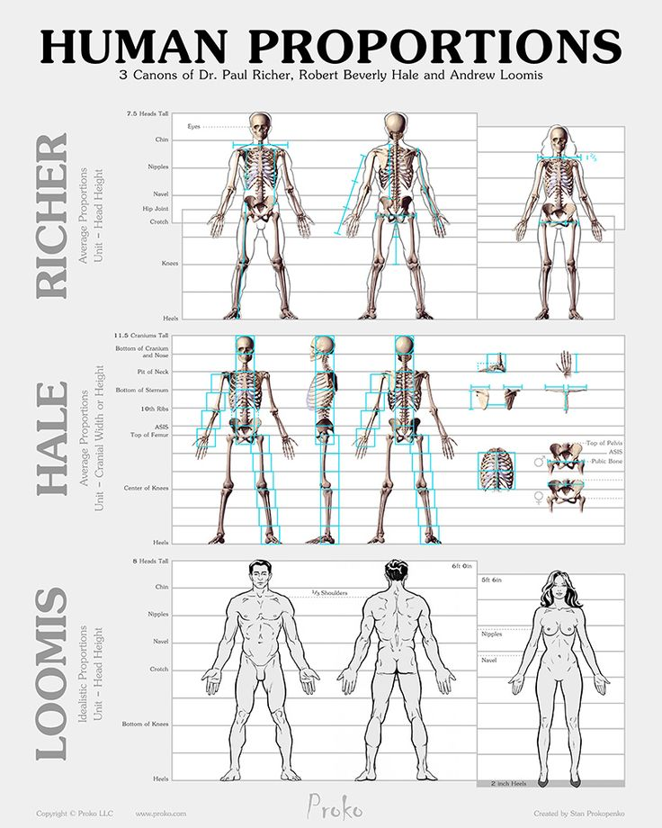 Skeleton Drawing Human Proportion Chart